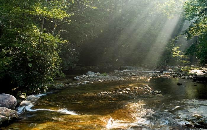 Forest sunrays on the stream