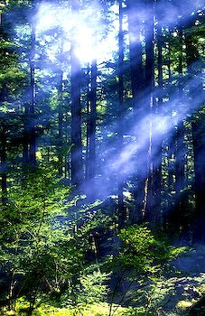 sunrays through the trees in Alaska