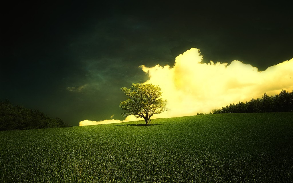 A single tree on a grassy hill