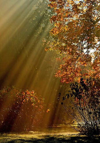 Sunrays shining through the trees in the Westonbirt Arboretum, UK. Photo by Terry.