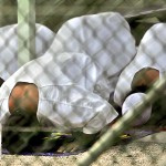 Muslim prisoners at Guantanamo Bay