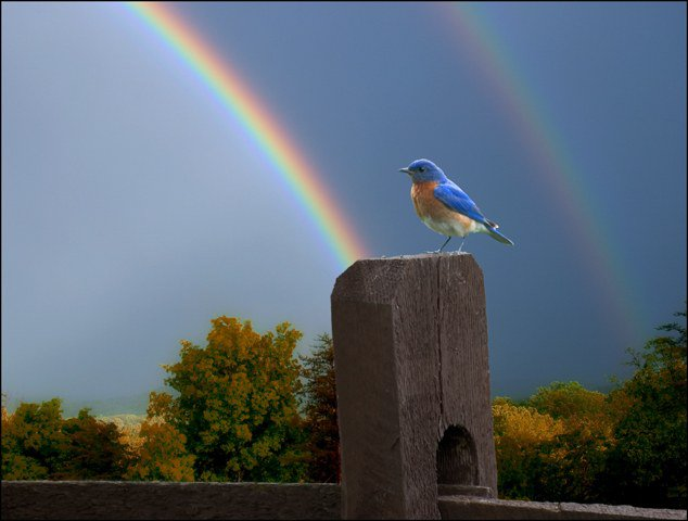 Double rainbow and bluebird