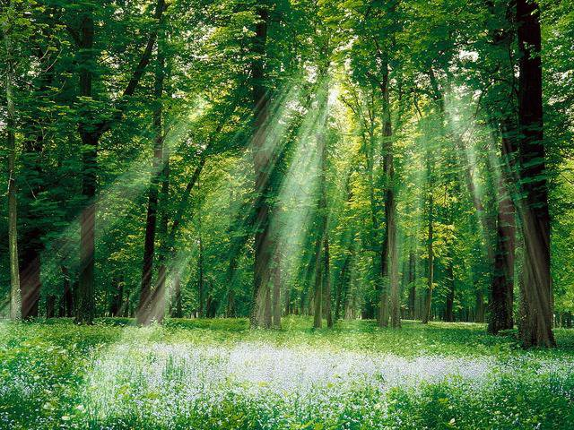 Sun rays in a green forest