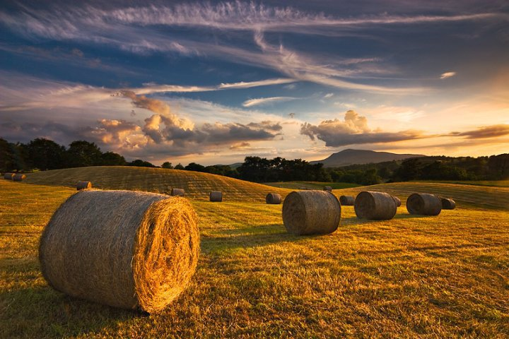 Round hay bales on a farm