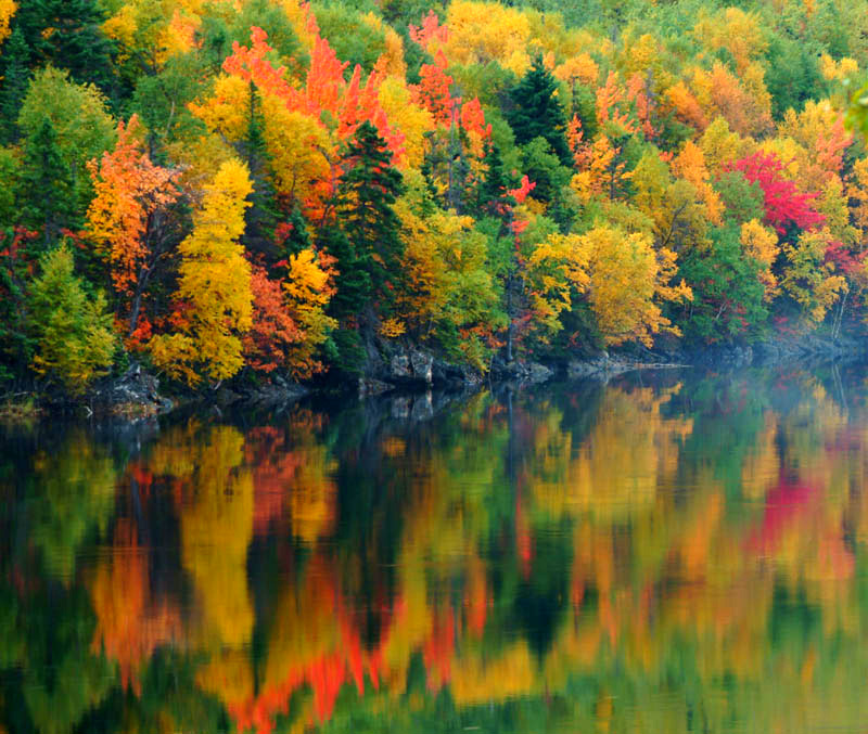 Beautiful lake and forest in Canada