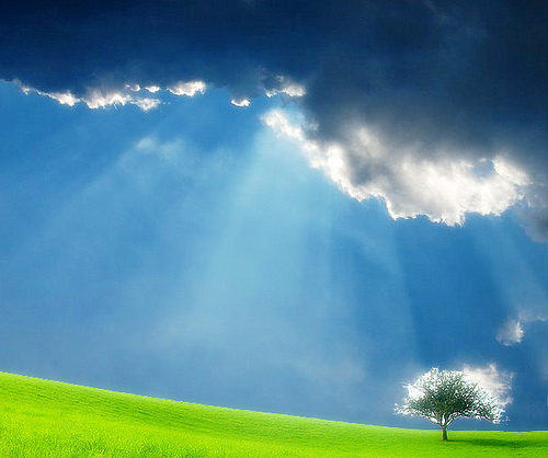 Lonely tree and sun rays