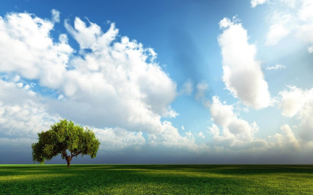 Single tree and big, bright clouds in a blue sky