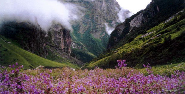 Mountains above a beautiful valley with flowers