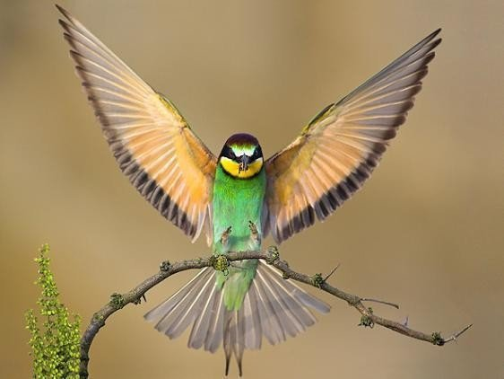 Green bird with spread wings