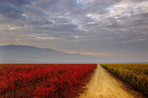 Grape vineyards in the San Joaquin Valley
