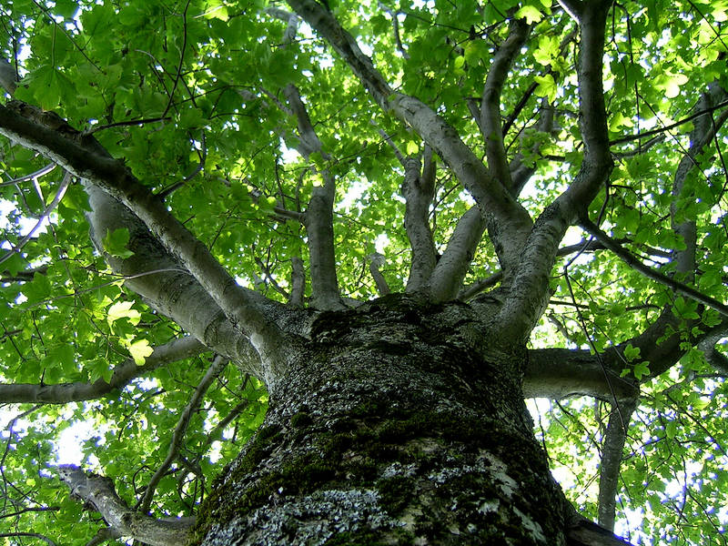 Tall, majestic tree