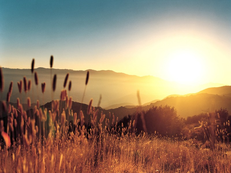 [Image: sunrise-over-wild-grasses.jpg]
