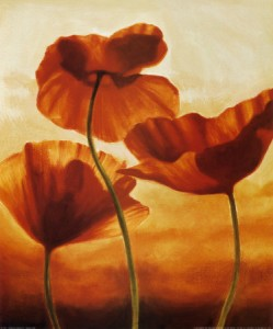 Poppies in sunlight