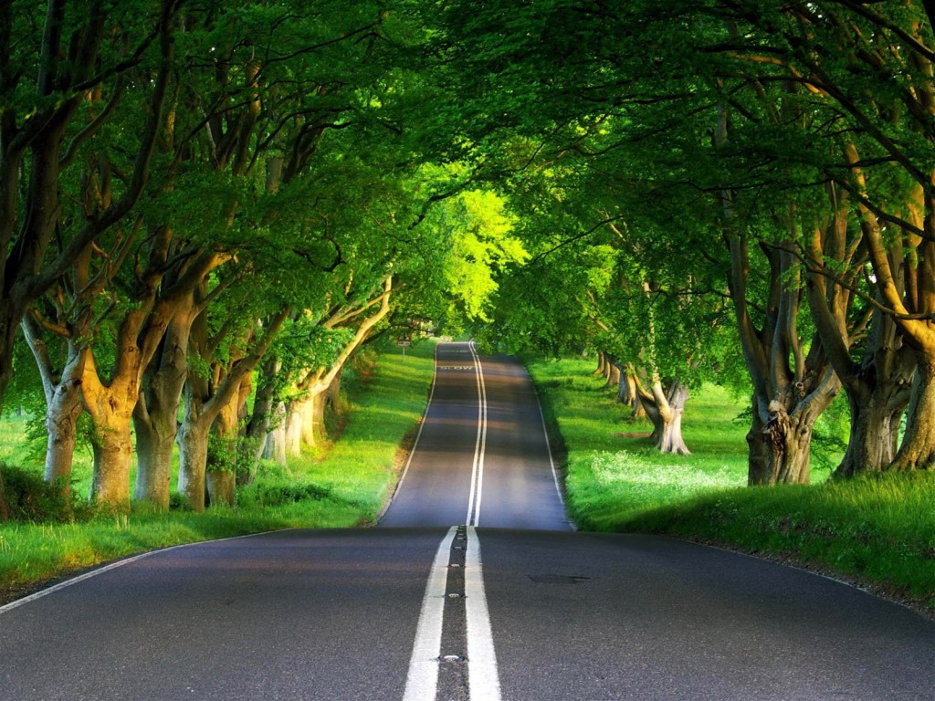 Beautiful road, forest road, road to the future