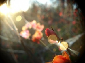 Flower bud in sunlight