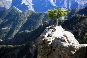 Tree growing from a rock