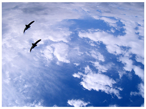 Cloud and birds