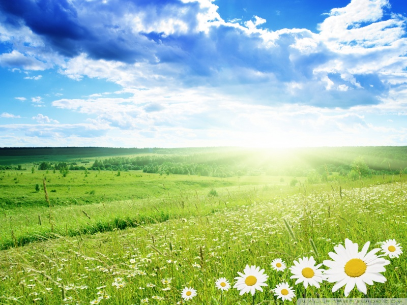 Field of flowers and sun shining