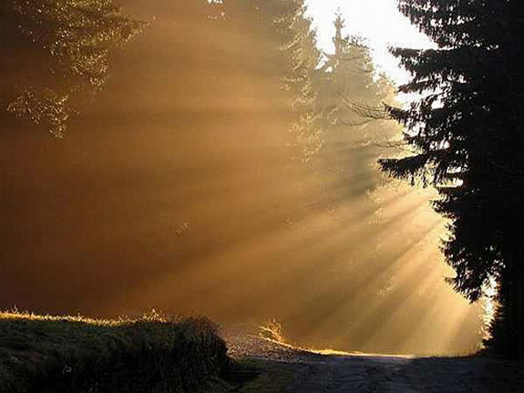 Sunlight in the forest, sunlight on the trees