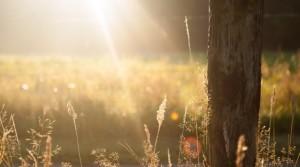 Sun rays in a field