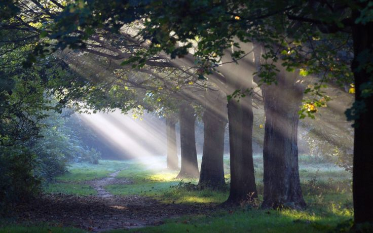 Sunlight shining through trees onto a forest path